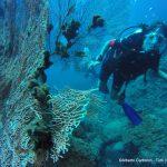 Phi Phi island underwater